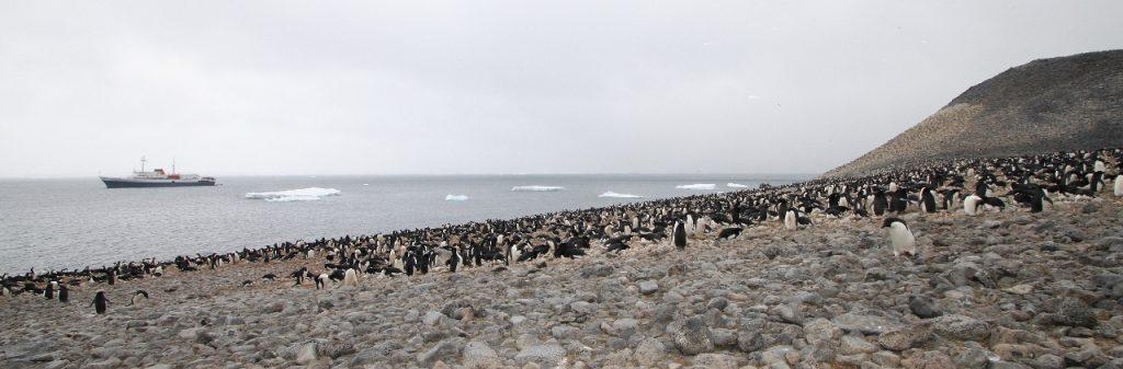 Adelie penguin colony, Paulet Island.